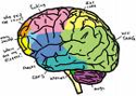 coloured-brain-image